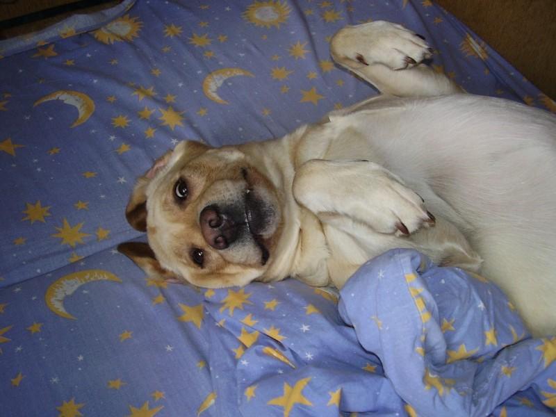 10 основных ошибок в вопpосах коpмления собак