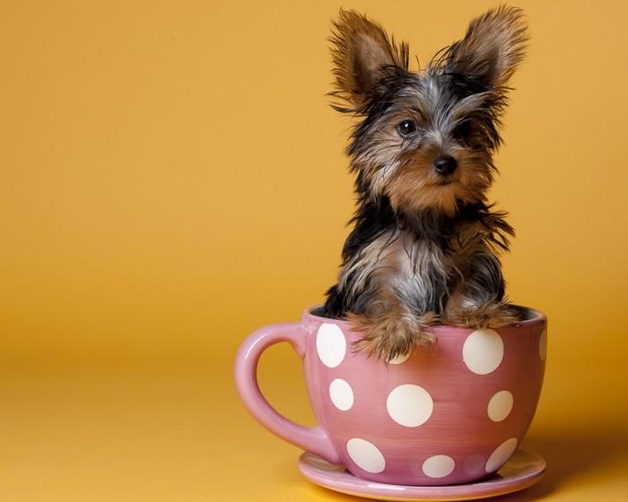 Сколько должен стоить хороший щенок? 2