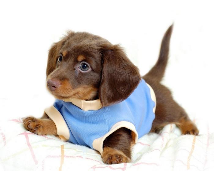 101 вопрос, который задала бы ВАША СОБАКА ветеринару (Часть 1)