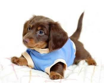 101 вопрос, который задала бы ВАША СОБАКА ветеринару (Часть 1) 2