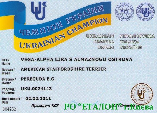 БОЛЬШОЕ ПОСТУПЛЕНИЕ чемпионских сертификатов 27 декабря 2013