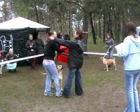 II Фестиваль американских стаффордширских терьеров