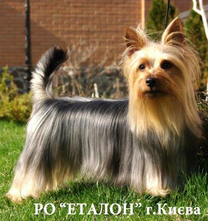 http://dneprovskoe.kiev.ua/uploads/posts/2014-01/thumbs/1389971870_silki.jpg