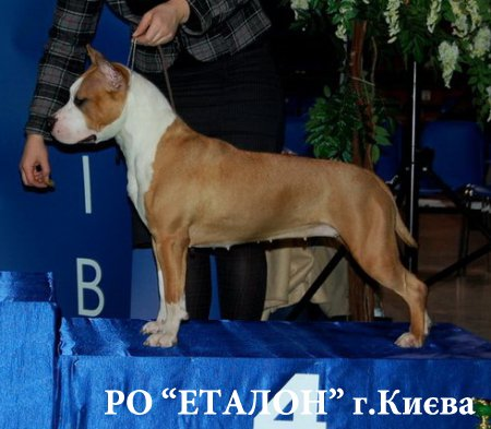 http://dneprovskoe.kiev.ua/uploads/posts/2014-01/thumbs/1389974062_ast.jpg